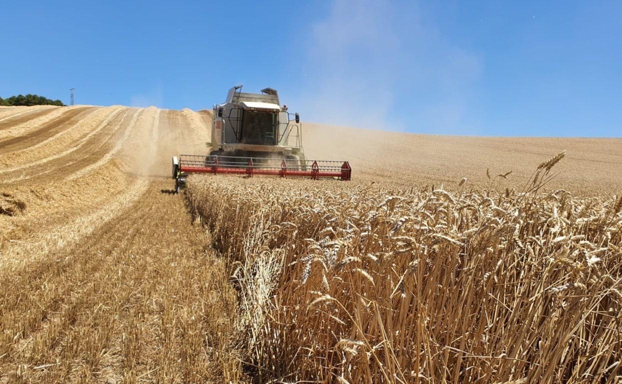 Preocupación por la precaria situación de liquidez de los cerealistas europeos
