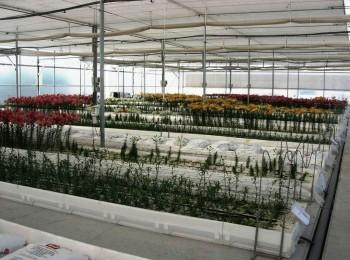 Impulso a la presencia internacional del sector de plantas y flores