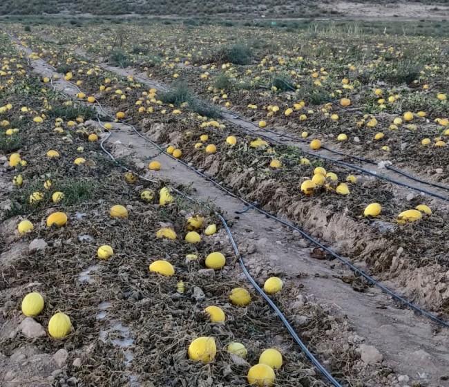 Murcia: denuncian un nuevo despilfarro de recursos hídricos procedentes de acuíferos sobreexplotados