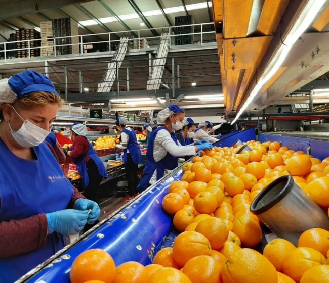 AECOC convierte su congreso anual en un reconocimiento al sector hortofrutícola
