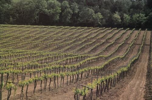 Las DD.OO. vitivinícolas piden que la futura PAC siga limitando las plantaciones de viñedo más allá de 2030
