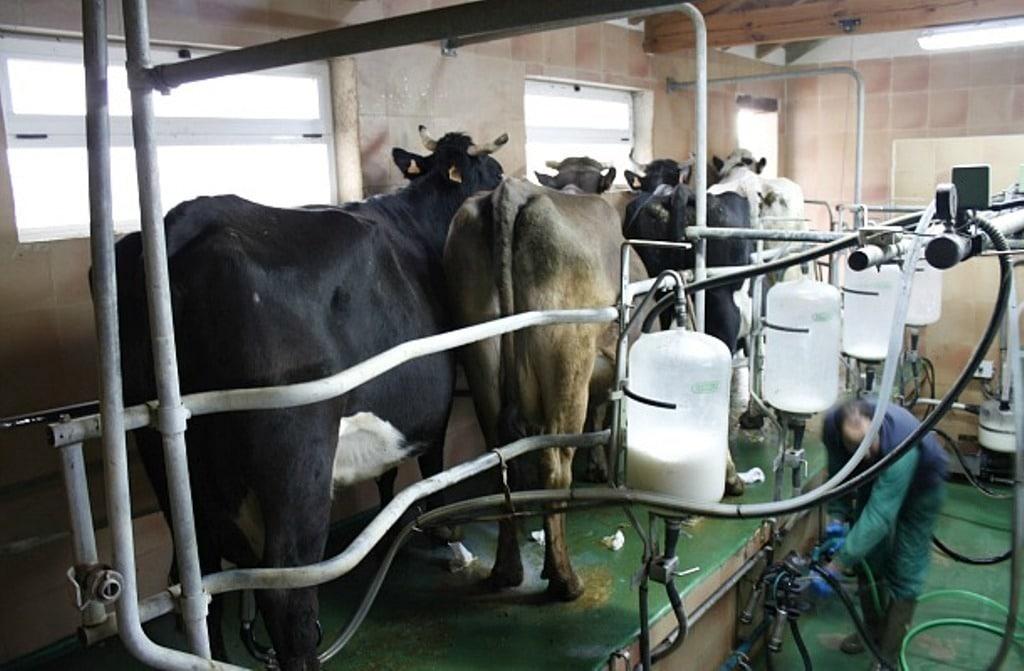 En julio continuó el goteo a la baja de los precios al ganadero de la leche de vaca