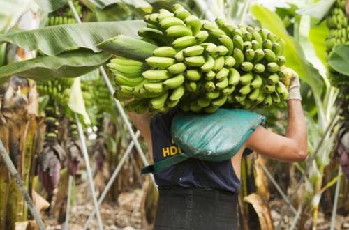 Las organizaciones de productores de las RUP reclaman el mantenimiento del presupuesto para el POSEI