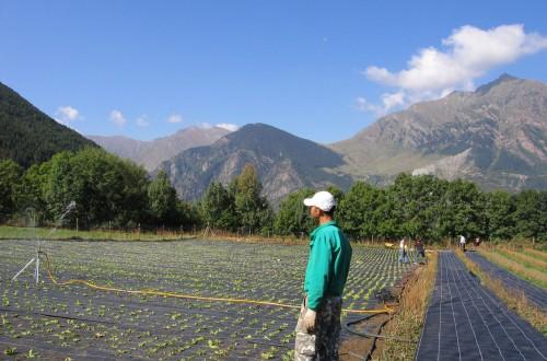 Convocadas las nuevas ayudas de más de 17 M€ a proyectos agro-innovadores de GOs supra-autonómicos