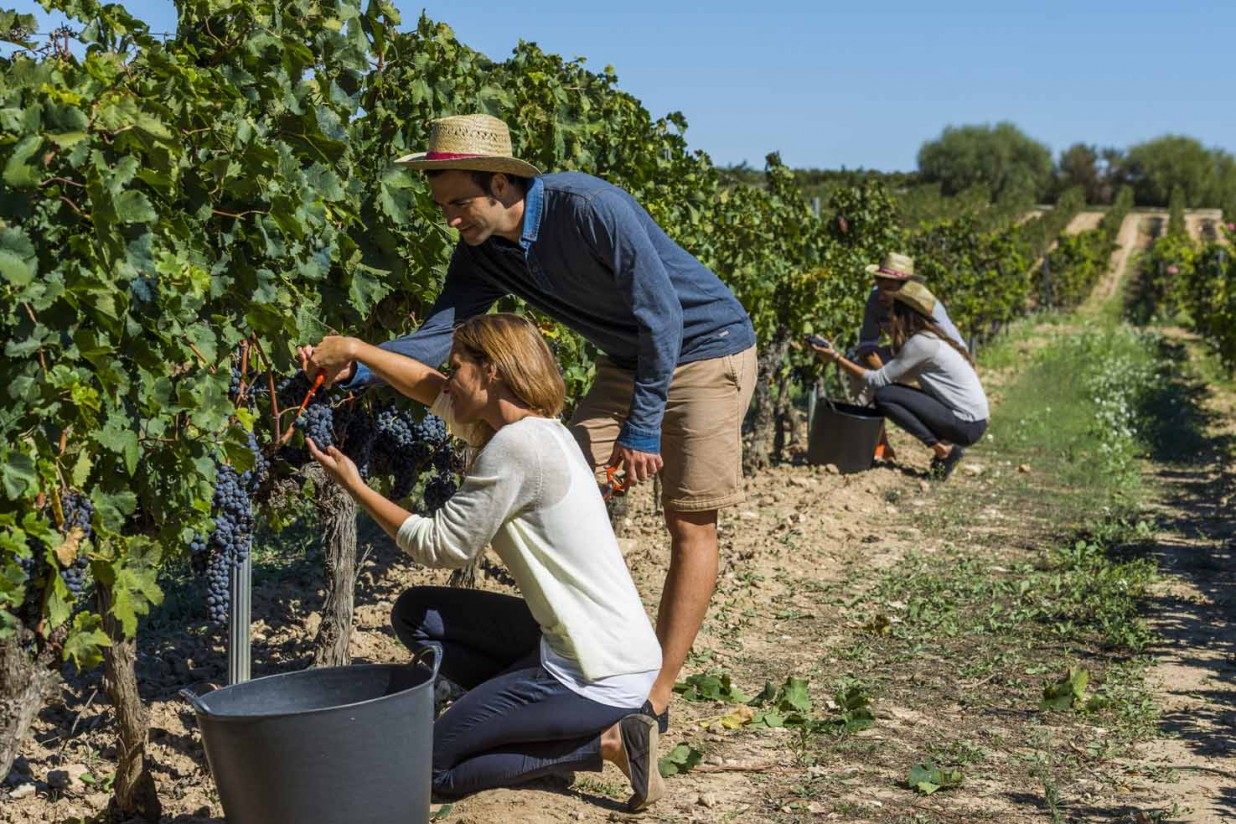 Septiembre 2020: menos paro registrado y mayor afiliación en la actividad agraria que el mes anterior