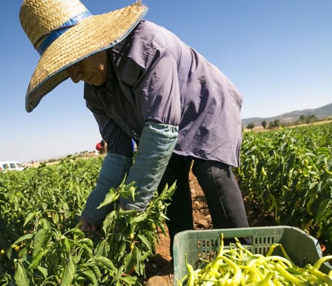 El sector primario bajó ocupados y elevó parados durante el tercer trimestre de 2020