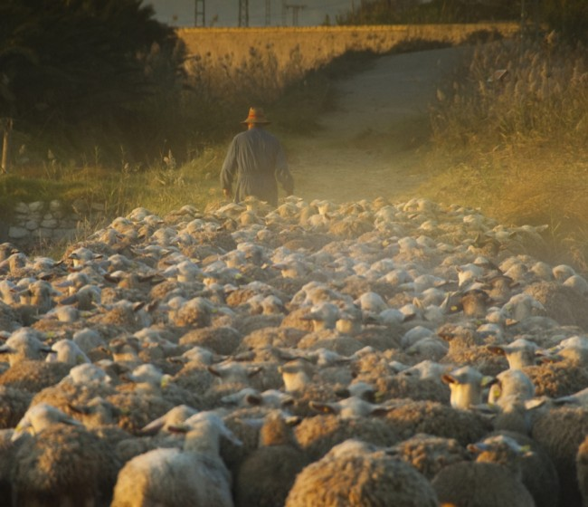 Reforma PAC: la gestión de los ecoesquemas preocupa a las organizaciones agrarias
