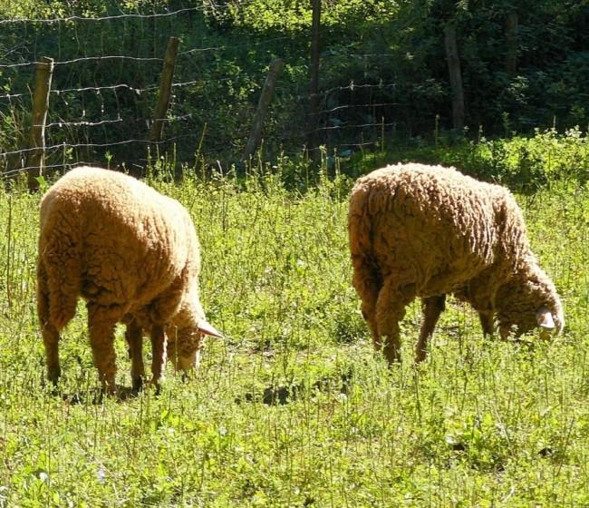 Bruselas analiza en un estudio el futuro de la ganadería sostenible en la Unión Europea