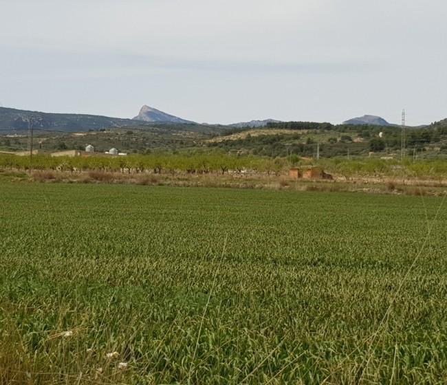 El precio medio general de las tierras de uso agrario bajó un 0,3% durante el pasado año
