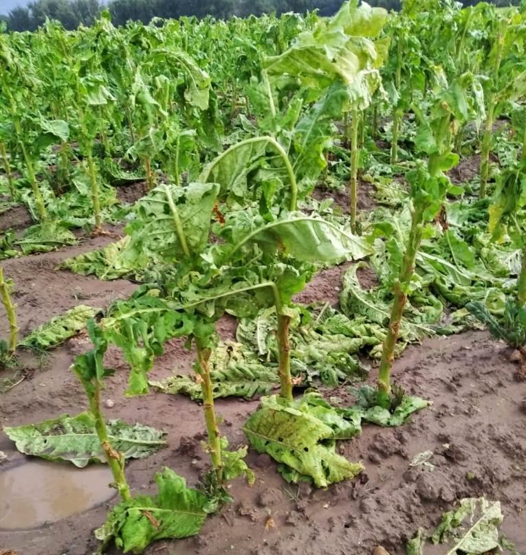 Las indemnizaciones del seguro agrario superaron los 500 M€ hasta final de septiembre