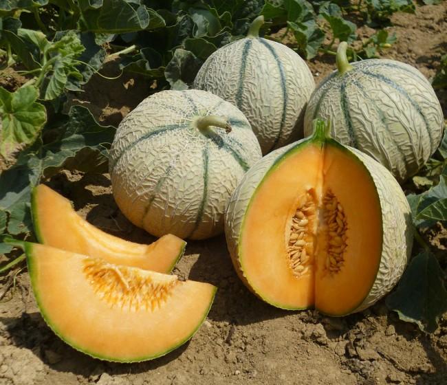 Basf comprará la empresa especializada en la mejora de melón ASL
