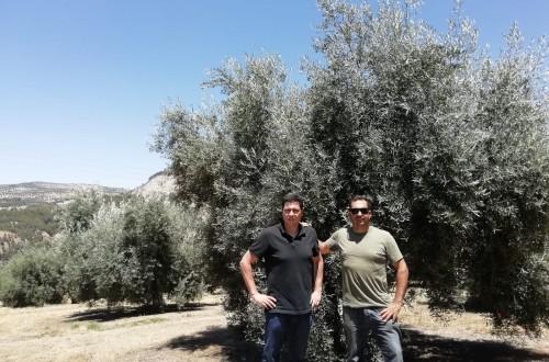 Bernardo Sánchez confía la nutrición de sus olivares a YaraRega