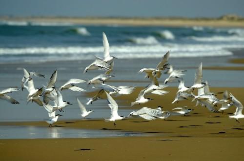 "El MAPA declara nivel de ""riesgo alto"" en España frente al virus de la gripe aviar del Norte de Europa"