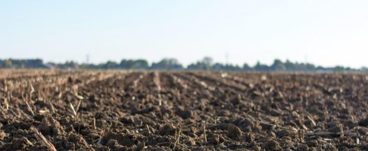 Alltech Crop Science obtiene el registro como biofertilizantes para sus productos Contribute