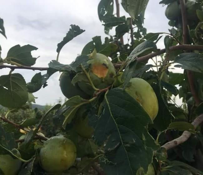 Agroseguro eleva a más de 540 M€ las indemnizaciones por daños en producciones aseguradas hasta 31 de octubre