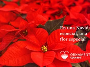 El sector de planta ornamental de Almería inicia la campaña «En una Navidad especial, una flor especial»