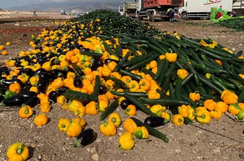 Coexphal destruye productos hortícolas por los bajos precios actuales