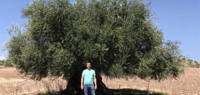 Agroquímicos Calatrava apuesta por YaraRega para fertilizar los olivares jienenses