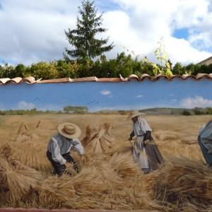 El reto inaplazable a favor de la agricultura familiar. Por Joaquín Olona Blasco.