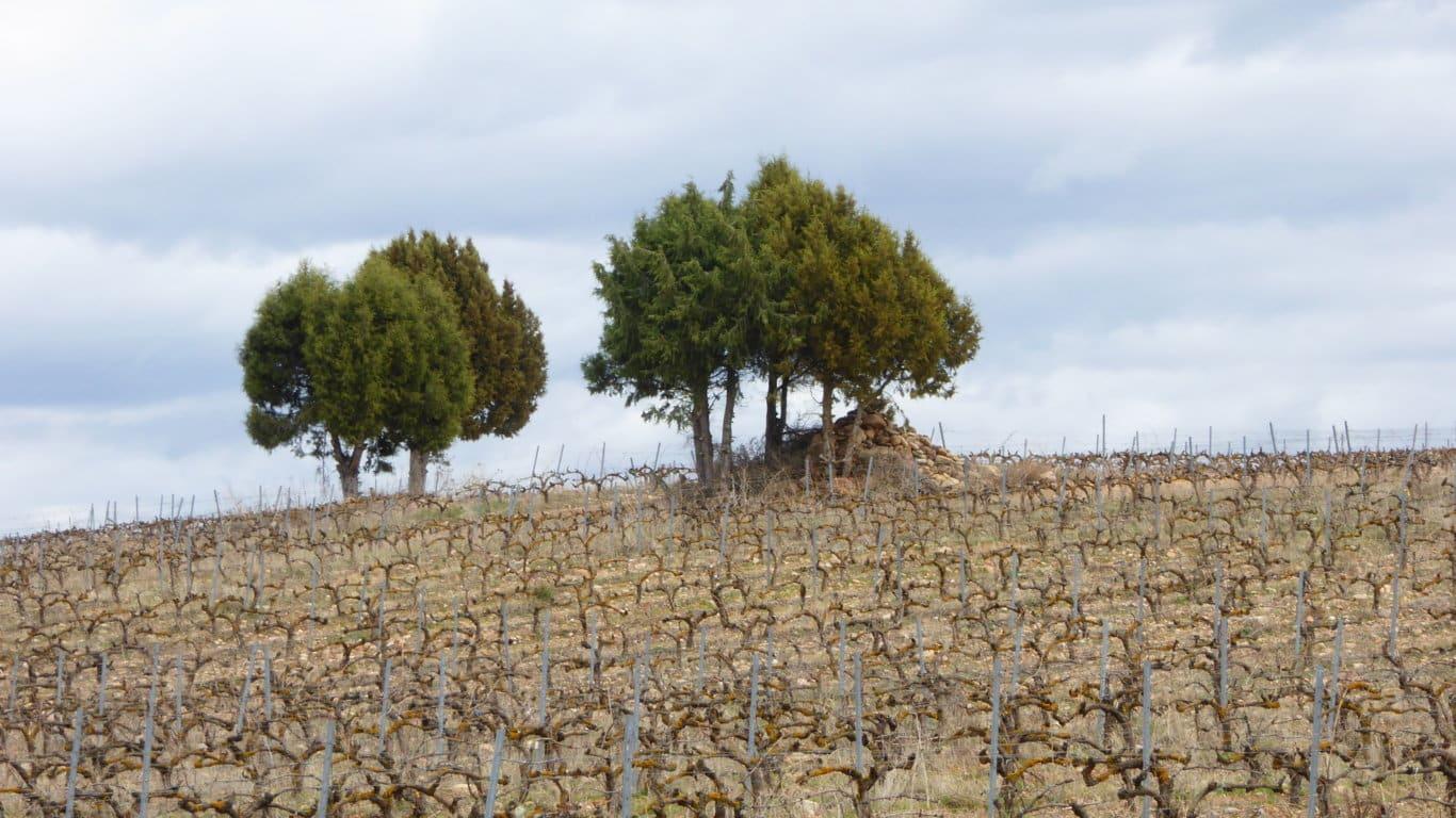 El sector agrario y agroalimentario español percibió 7.514 M€ de pagos PAC en el ejercicio financiero 2020