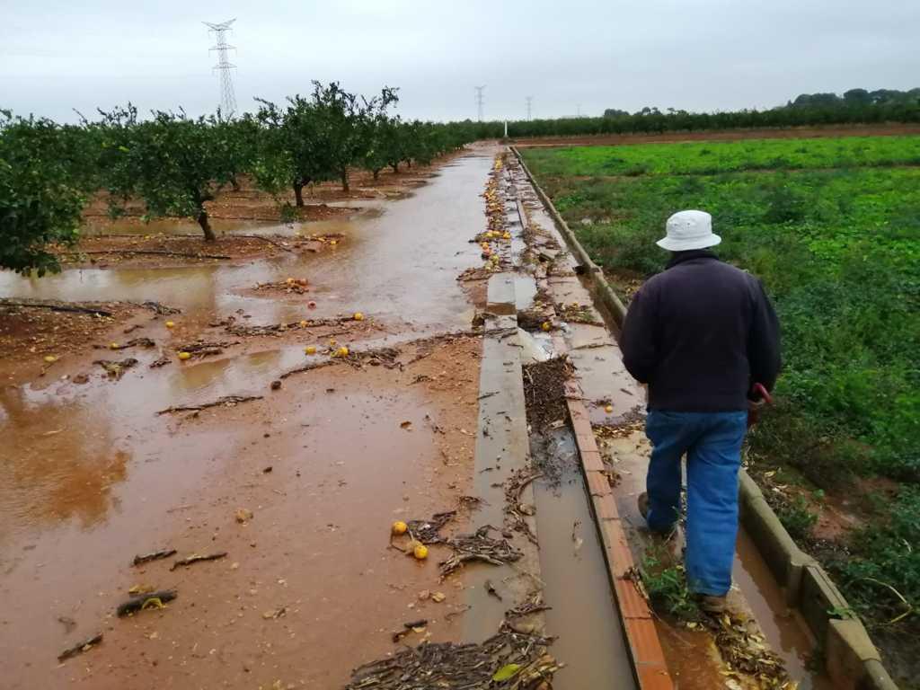 El pedrisco y el viento deja ya unas pérdidas de 8 M€ en la Ribera Baixa y Alta valenciana