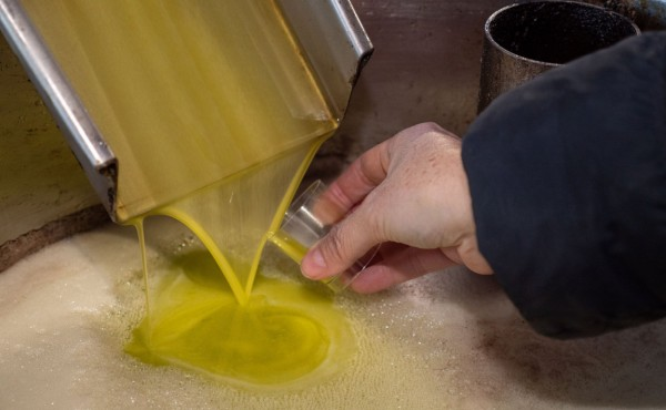 Bruselas prevé 2,23 Mt de producción de aceite de oliva en la UE en la campaña 2020/21