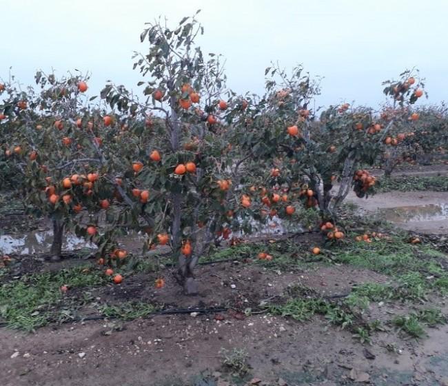 Vía libre al 42º Plan de Seguros Agrarios, con un presupuesto de 256,5 M€ para 2021