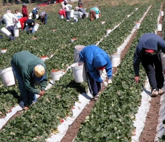 Octubre elevó el paro registrado en Agricultura en 10.234 desempleados