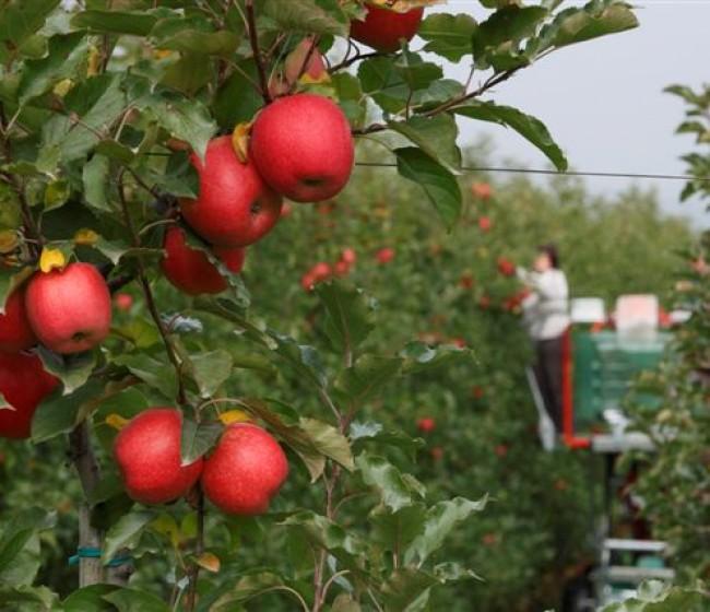 Unión de Uniones alerta del impacto del Pacto Verde en la agricultura europea