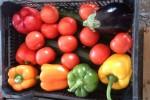 Once empresas de Almería con expediente sancionador por reetiquetado de frutas y hortalizas de Marruecos