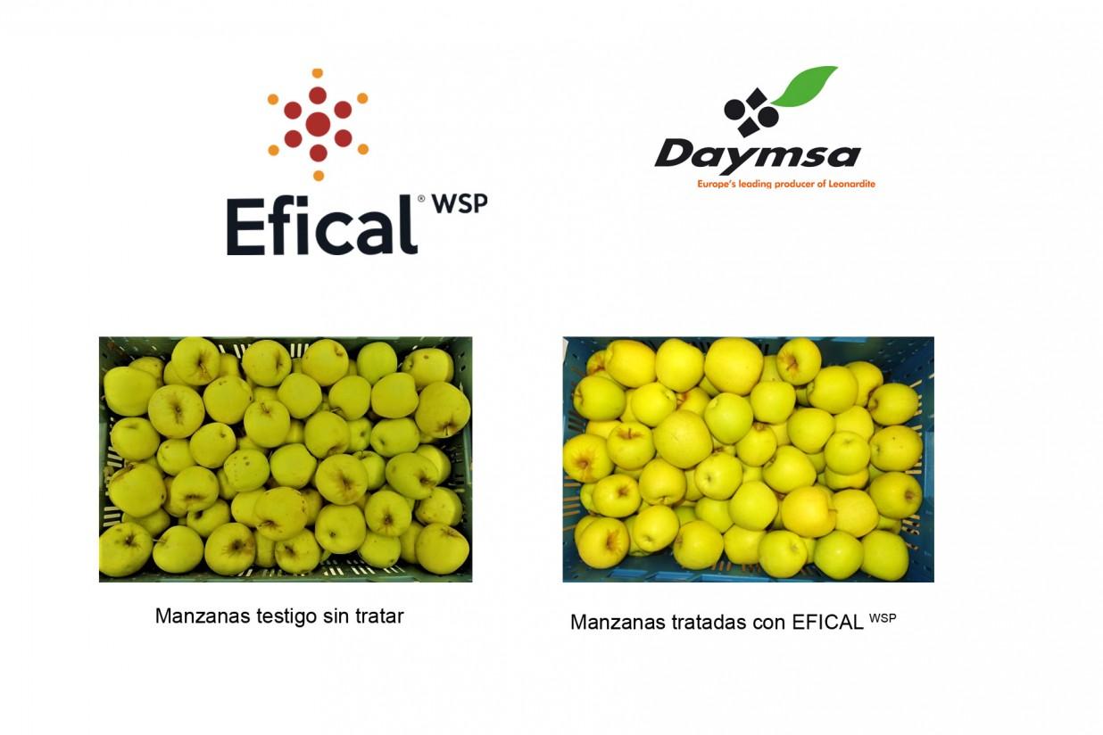 Efical WSP, la solución de Daymsa contra las deficiencias de calcio