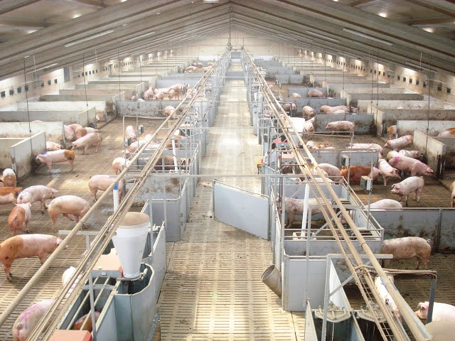 Los ingenieros agrónomos reivindican sus competencias en bienestar animal