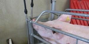 Gestión del agua en explotaciones porcinas