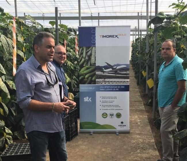 Sipcam Iberia recomienda Timorex Gold contra oídio y botritis en hortícolas