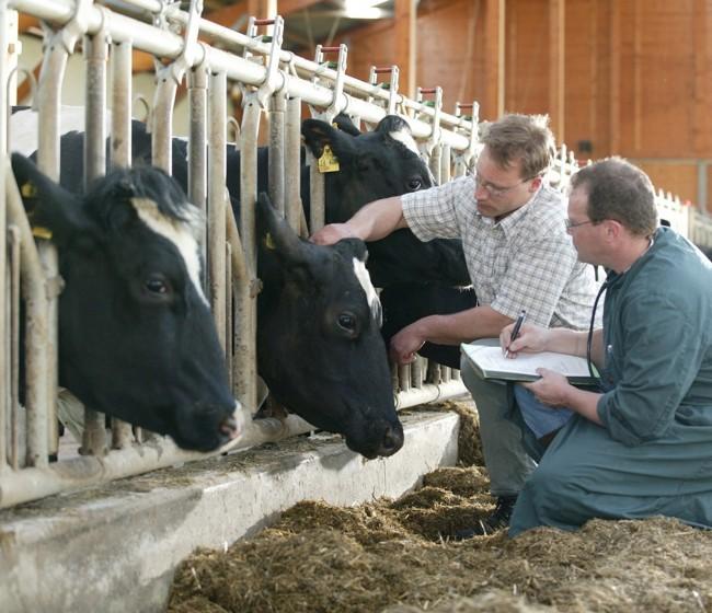 Presvet y la nueva normativa sobre prescripción veterinaria