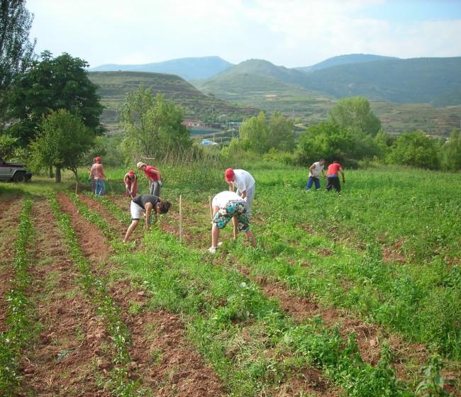 Reforma de la PAC: una oportunidad para reenfocar nuestra política agraria en favor del modelo familiar. Por Joaquín Olona Blasco