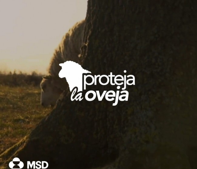 'Proteja la Oveja', nuevo punto de encuentro de MSD Animal Health para los profesionales del sector