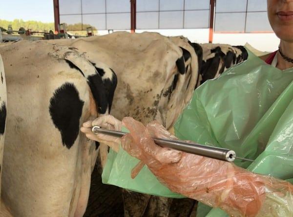 Prevención de gestaciones gemelares en vacas lecheras