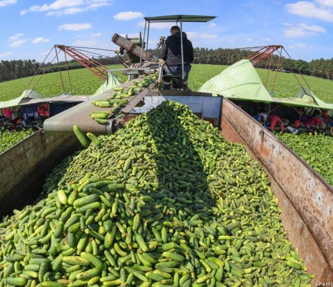 Transición hacia una nueva política agrícola de la UE. Por Parlamento Europeo.