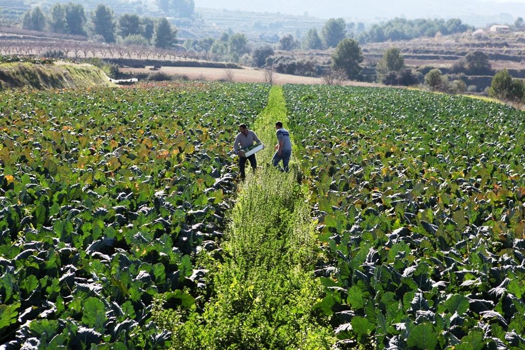 Bruselas destinará 182,9 M€ a promoción agroalimentaria en 2021 con el foco en la agricultura sostenible