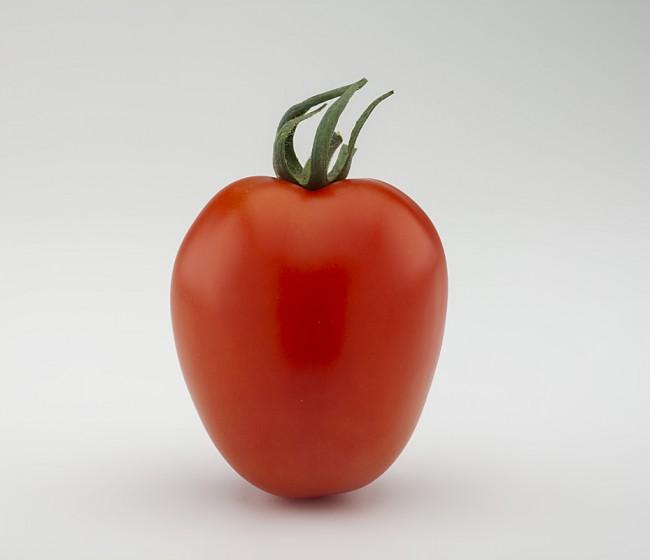 Basf hace balance del primer año de su tomate pera Aviozan