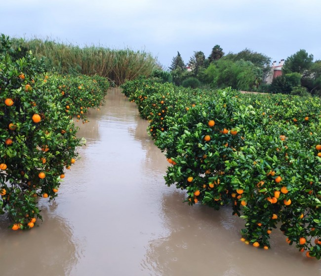 Autorizada la subvención de los recargos por siniestralidad en los seguros agrarios