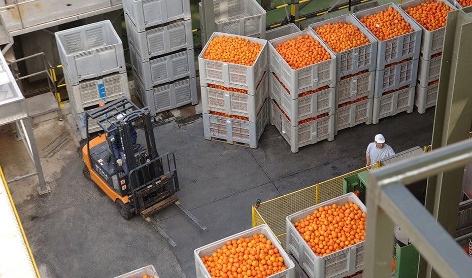 Denuncian la hipocresía de la CE al lanzar balones fuera sobre sus competencias en el control de cítricos importados