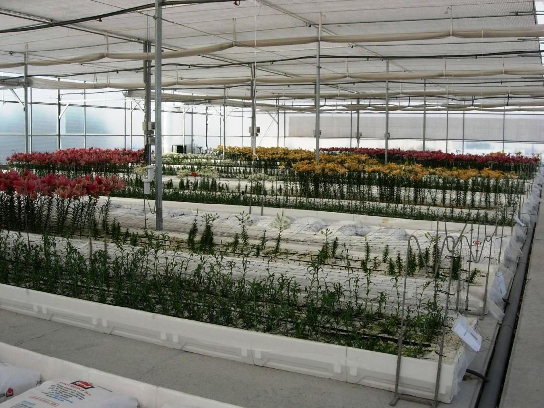 El sector de flor y planta exportó por valor de 435 M€ en 2020