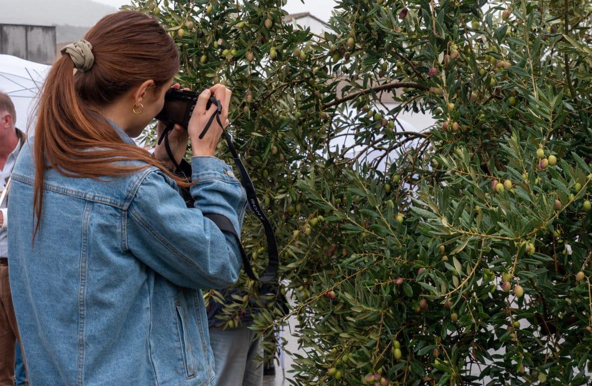 La producción mundial de aceite de oliva podría llegar a 3,23 Mt en la campaña 2020/21