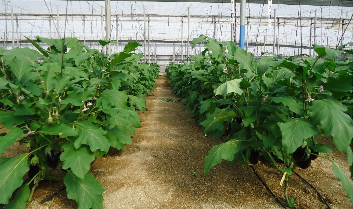 Andalucía sube a 35 las zonas vulnerables a la contaminación de nitratos de origen agrario