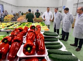 La exportación de frutas y hortalizas frescas cierra el año con 14.200 M€