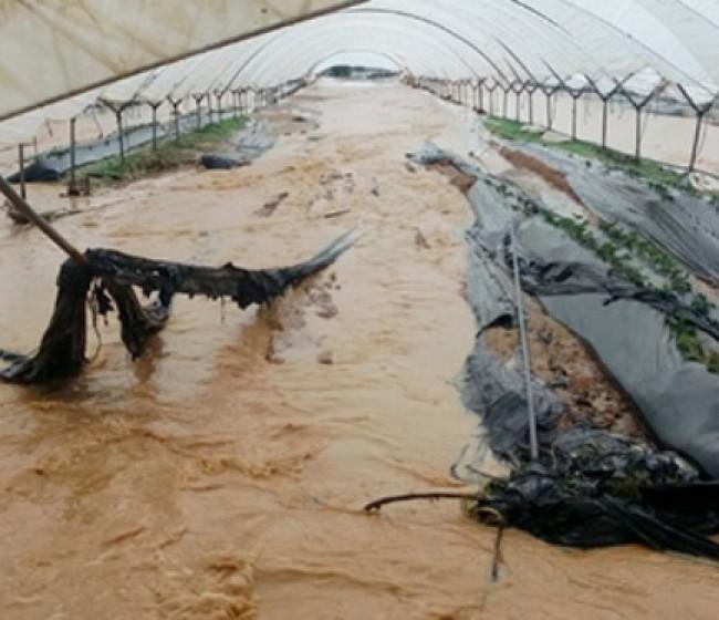 Visto bueno al 42º Plan de Seguros Agrarios financiado con 256,5 M€ para 2021