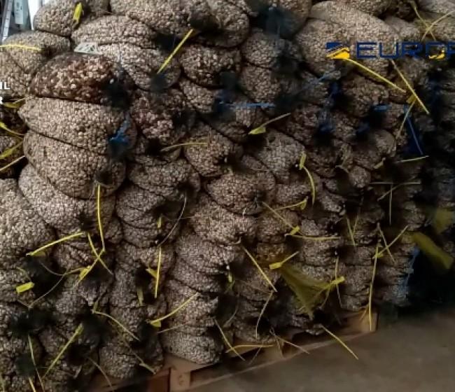 Destapada trama empresarial que vendía falsos pistachos ecológicos en España y Francia