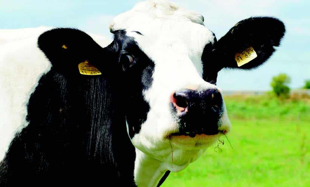Sostenibilidad en explotaciones ganaderas de vacuno de leche